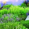 herb-garden-m-m