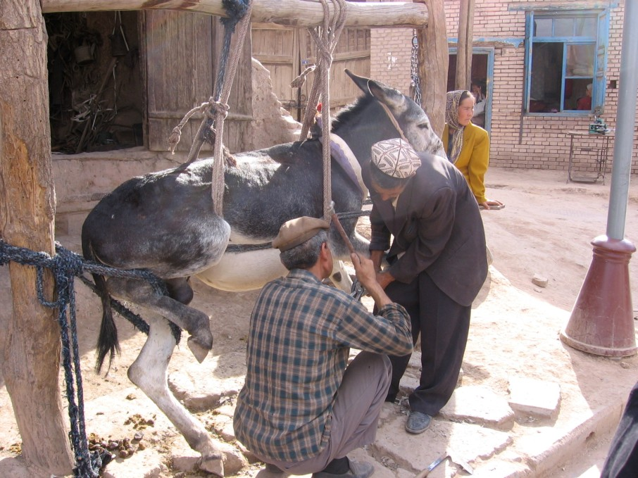 Guy shoeing a mule in the Dunhuang marketplace. One stall over, a dentist was drilling out someone's tooth.