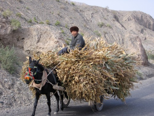 Uighur gentleman on the way to market.